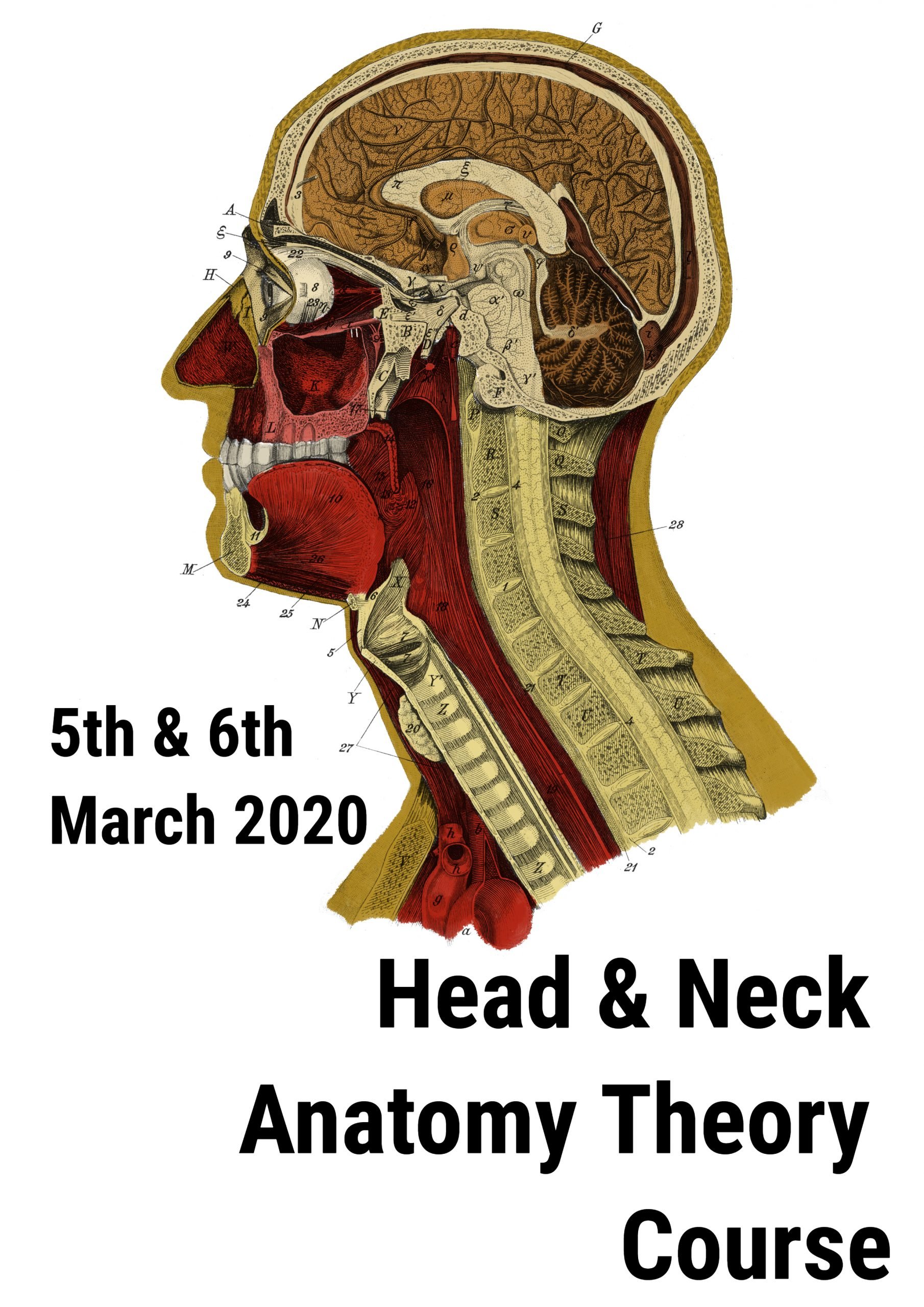 Head and Neck Anatomy Course